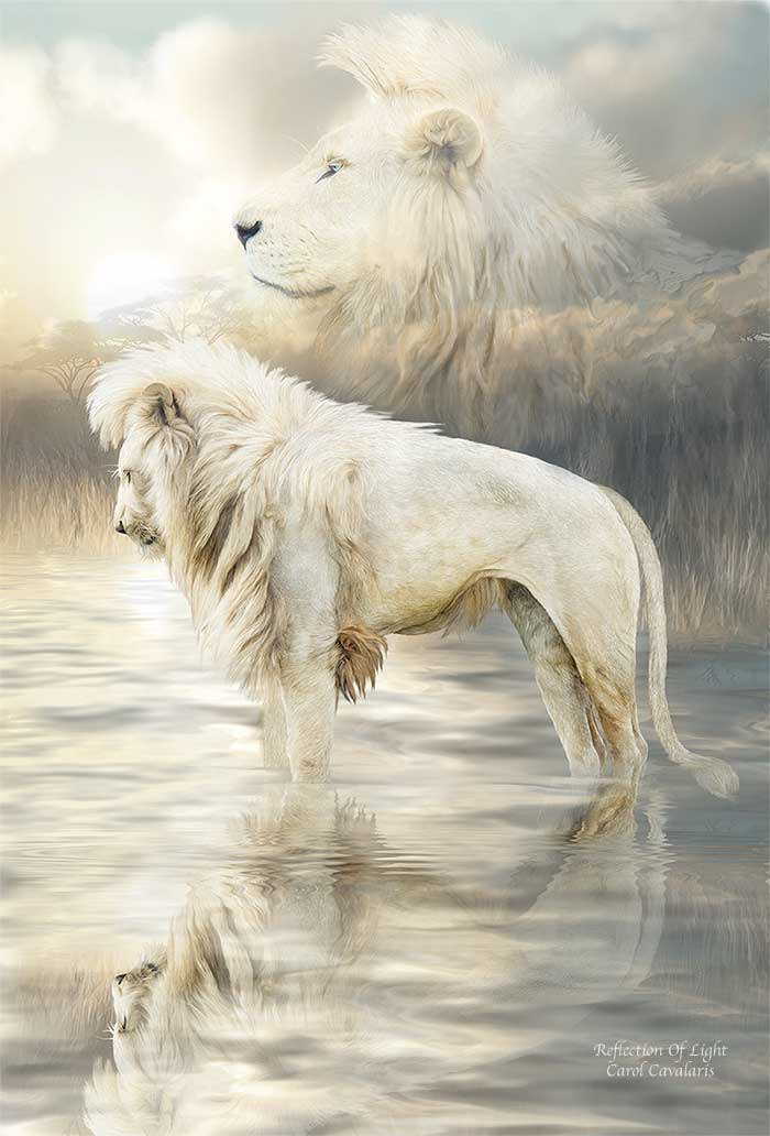 Spirit Of The Wild Series White Lion Reflection