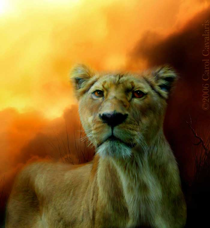 Lioness Is Near Two