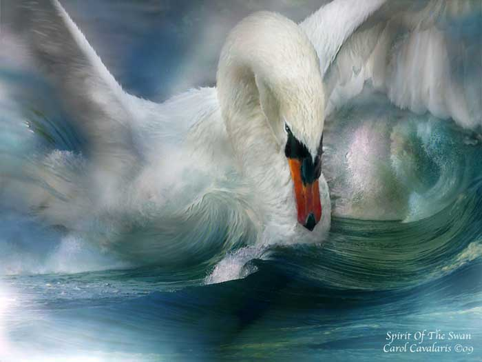 Spirit Of The Swan