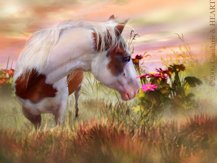 horses and flowers wallpaper - photo #12