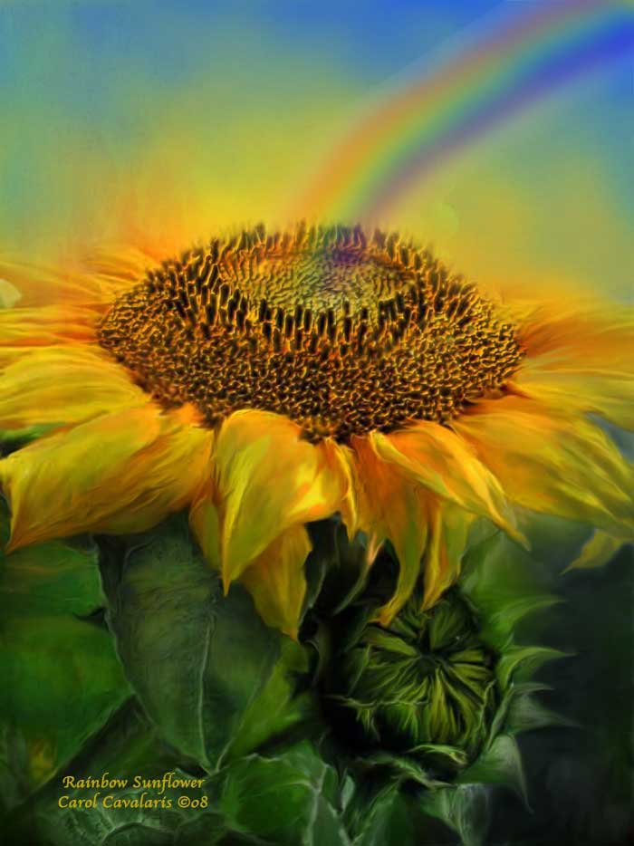 Rainbow Sunflower