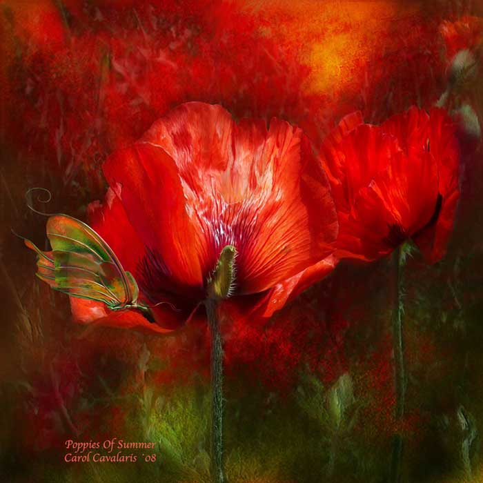 Poppies Of Summer