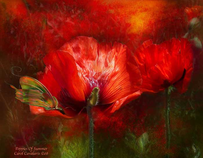Poppies Of Summer Two