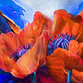 Red Poppies On Blue