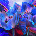 Blue Poppies On Red
