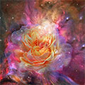 Universe Within A Rose
