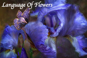 Language Of Flowers Series